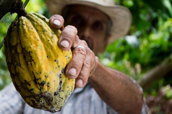 cacao-origini