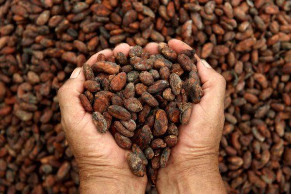 semi-di-cacao-768x512